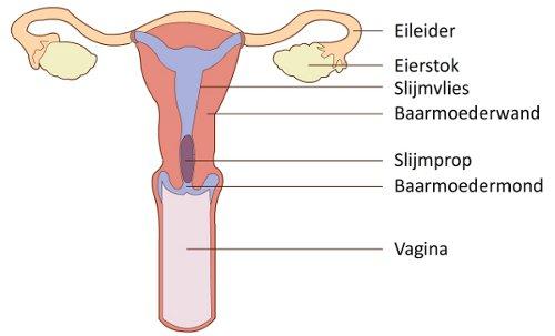 eierstokken pijn tijdens menstruatie