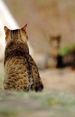 Een kat kan voor een allergische reactie zorgen