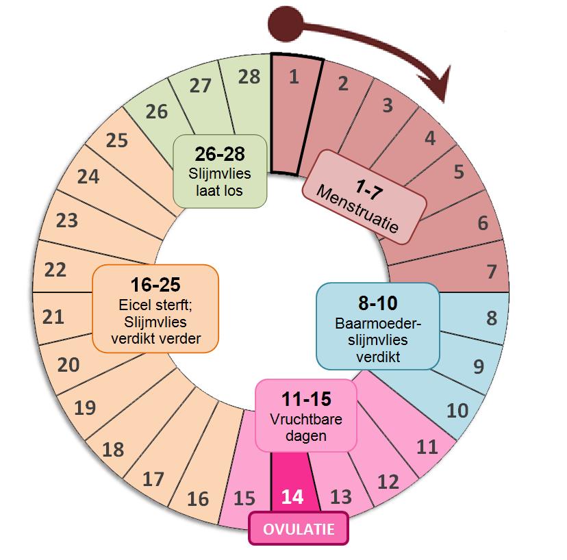 cyclus berekenen wanneer testen